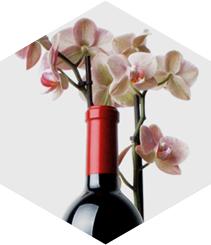 La mutabilidad del vino