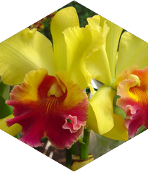 The Palau Robert Blossoms under the Orchid Spell