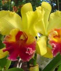 El Palau Robert florece bajo el hechizo de las orquídeas