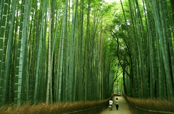 japon-paz-para-el-alma-paseo-de-gracia-4