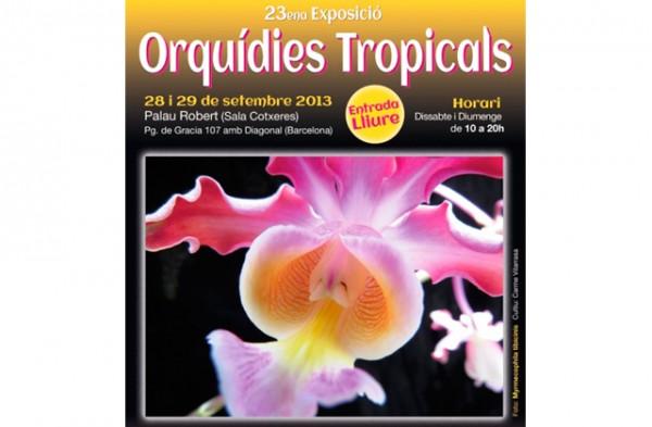 orquideas-tropicals-al-palau-robert-exposicio-1