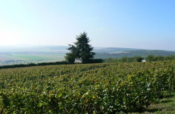 champagne-Clos-Sainte-Sophie-paseo-de-gracia-7