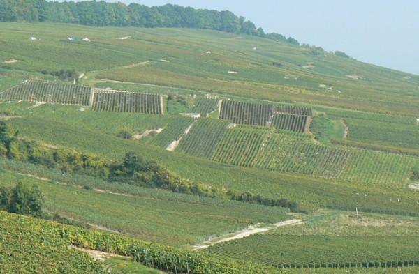 Pascal-Doquet-champagne-paseo-de-gracia-7