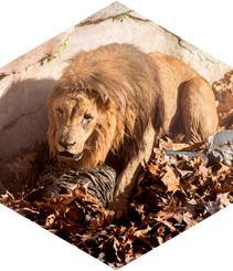 BarZooLona #1: Luchando contra leones