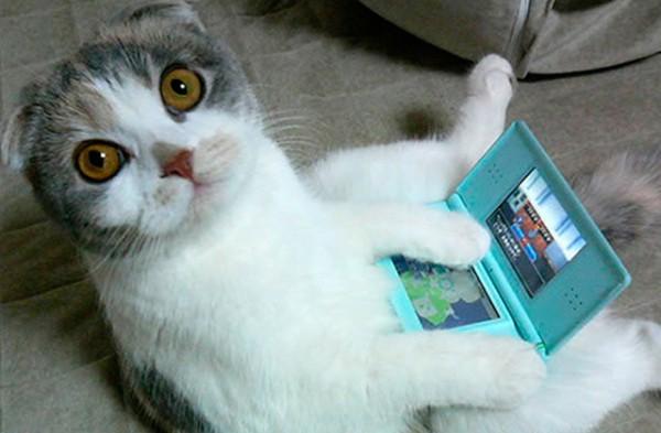 glosario-mwc-gato-tecnologico