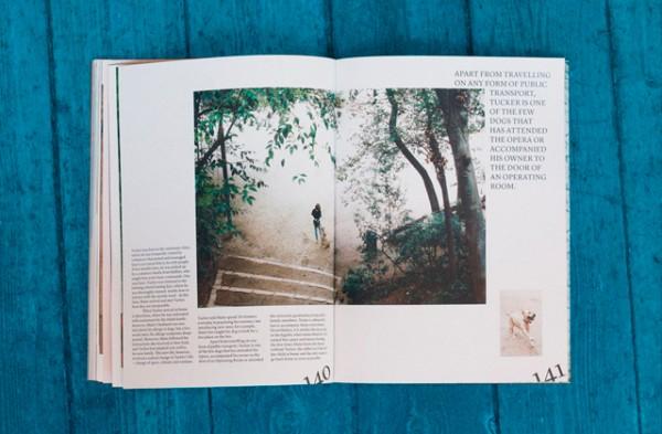 agapornis-magazine-5