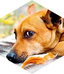Las protectoras recogen un animal abandonado cada cinco minutos