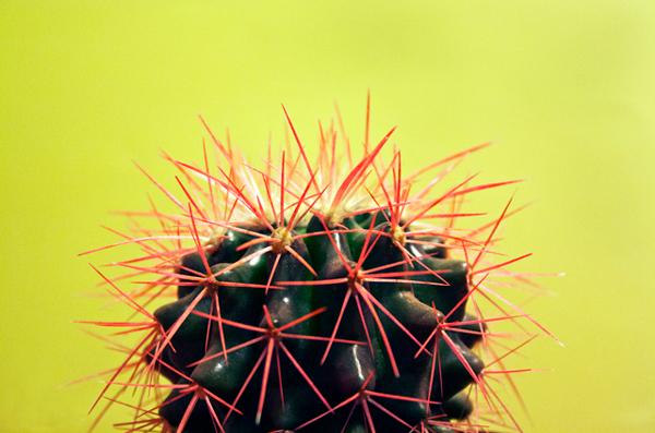 cactus_640x420