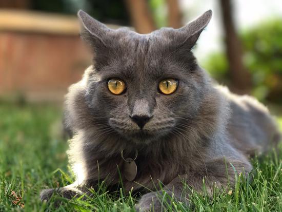 gato Trucos para hacer obras maestras fotográficas con el Iphone7 Plus
