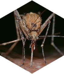 5 gadgets loquísimos contra los mosquitos