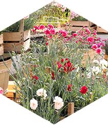 Flors al Mercat, un domingo de flores, plantas, artesanía, brunch, vermut y sostenibilidad